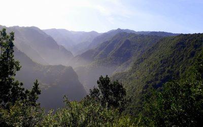Apresado en La Palma por cometer diferentes delitos