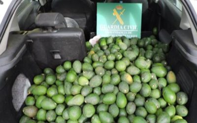 Dos detenidos por robar 171 kilos de aguacates en una finca de La Orotava.